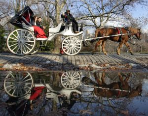 new_york_horse_carriages_in_central_park